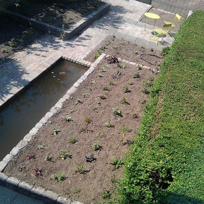 Tuinrenovatie Cornelis Dopperstraat - overzicht na aanplant