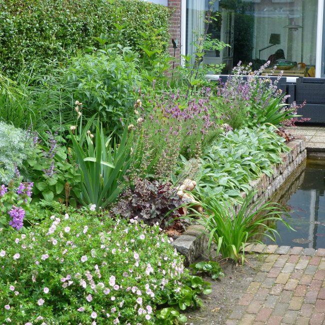 Tuinrenovatie Cornelis Dopperstraat - een jaar na aanplant