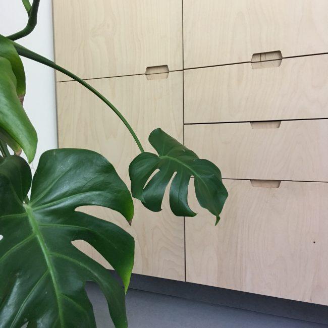 Keukenrenovatie - plant en kastenwand